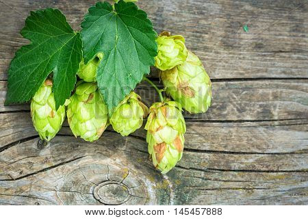 Fresh Green Hops On A Wooden Table With Copy Space