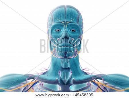 Human muscular vascular, lymphatic and nervous system. Xray like image. Blue colors. 3D illustration.