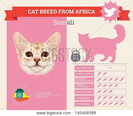 Somali Cat breed vector infographics. This cat breed from Africa