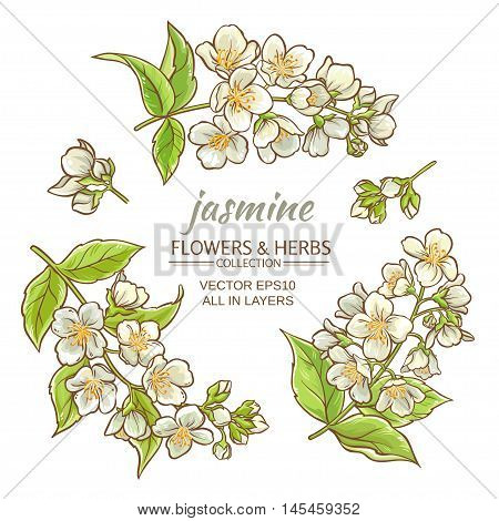 illustration with jasmine flowers on white background