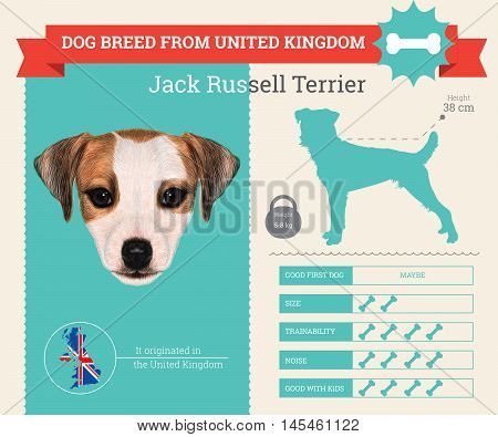 Jack Russell Terrier dog breed vector infographics. This dog breed from United Kingdom