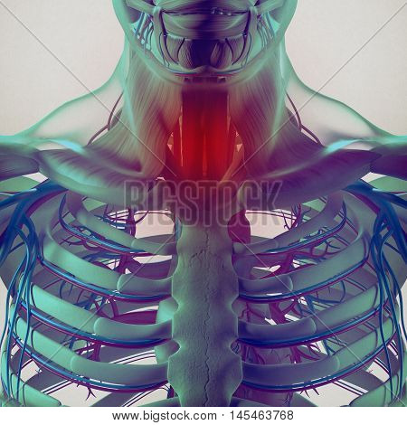 Human anatomy,sore throat infection, chest, rib cage. 3d illustration.