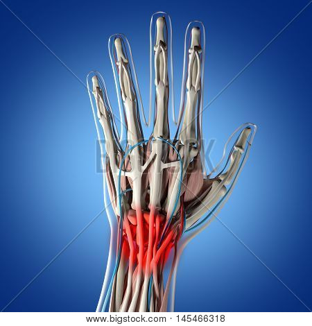 Human anatomy hand palm, joint pain in wrist. 3D Illustration.