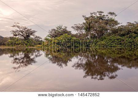 View Over The Cuyabeno River National Park Cuyabeno Ecuador South America