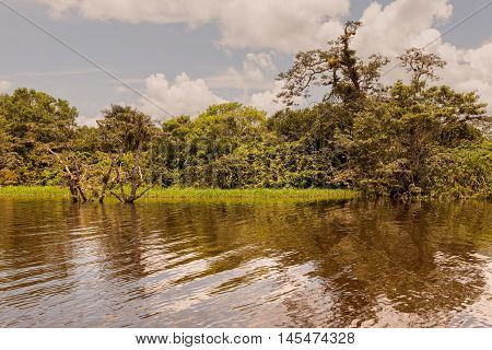 Large Water Trees National Park Cuyabeno Ecuador South America