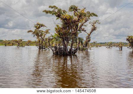Cuyabeno Dense Vegetation Against The Sunny Day On Cuyabeno River Ecuador