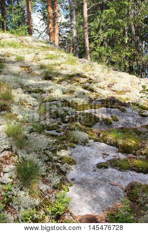 Beautiful moss in the Finnish forests Finland North Karelia