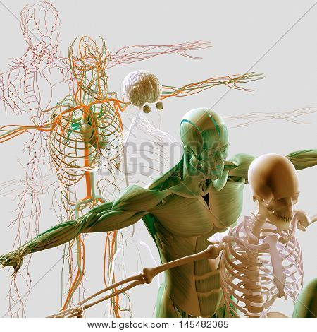 Human anatomy exploded view, deconstructed, layers. Separate elements muscle, bone, organs, nervous system, lymphatic system, vascular system. 3d illustration poster