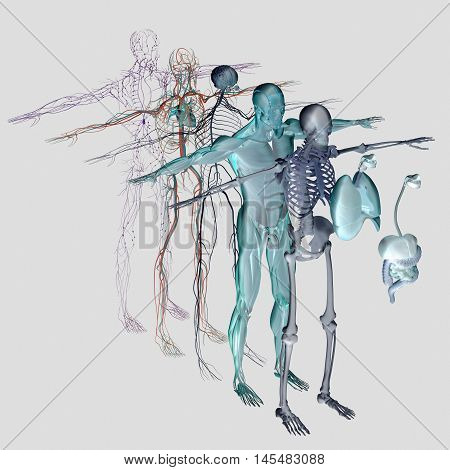 Human anatomy exploded view, deconstructed layers. Separate elements muscle, bone, organs, nervous system, lymphatic system, vascular system. Vibrant colors. 3d illustration poster