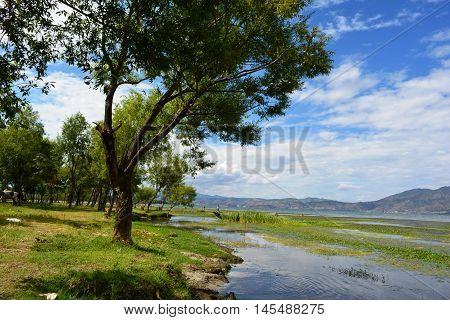 Green Lake Side Under Blue Sky At China