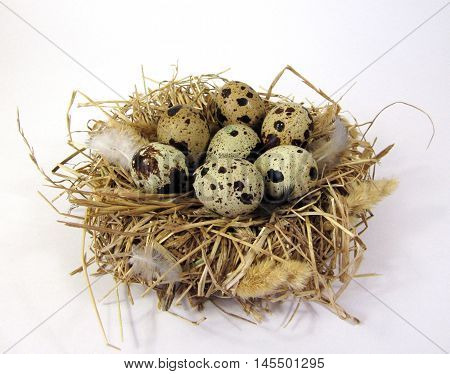 The bird's nest with eggs on a white background.