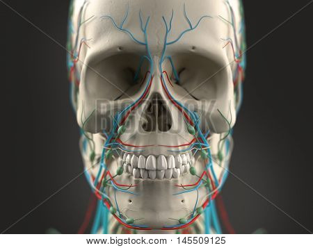 Human anatomy face and head close-up showing parts of skull and vascular system on a dark background. 3d illustration