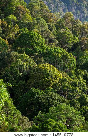 Lush green tropical forest background