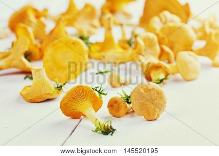 Yellow chanterelle or cantharellus cibarius forest mushrooms  on a white rustic wooden table.