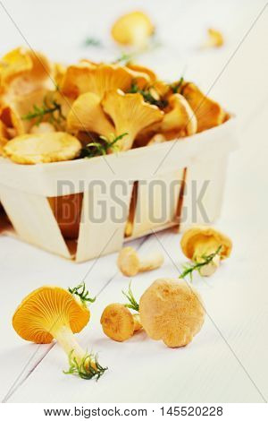 Yellow chanterelle or cantharellus cibarius forest mushrooms  on a white wooden background.