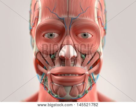Human anatomy face and head close-up showing eyes, muscular system lips, vascular system on a light background. 3d illustration