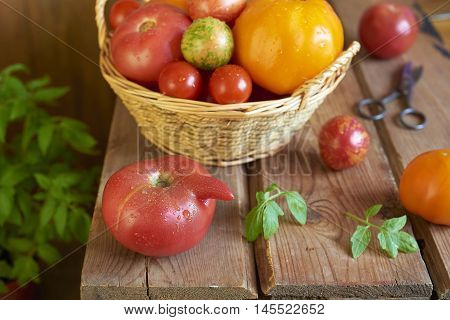 Fresh tomatoes in basket on wooden table