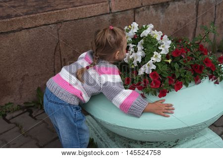 Little girl smelling flowers on a flower-bed.