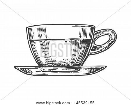 Tea picker woman tea leaves cup elephant. Vector engraved vintage isolated illustration for label poster web. Black on white background.