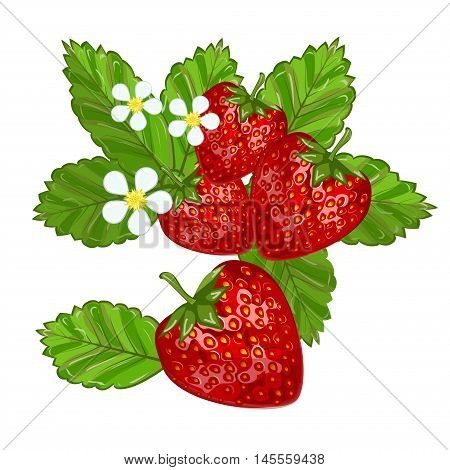 Strawberries with leaves sweet freshness healthy berry food. Isolated on white strawberry delicious health dessert. Fresh fruit red juicy vector strawberry nutrient refreshment organic food.