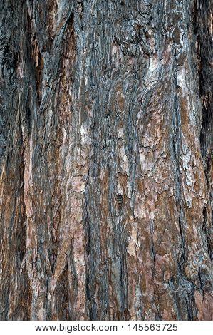 Close-up of bark texture of cedar tree