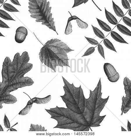 Black vintage engraving of autumn leaves on white background. Seamless pattern. Vector autumnal oak, maple, acer, rowan leaf, acorn, maple keys seed, helicopters set collection.