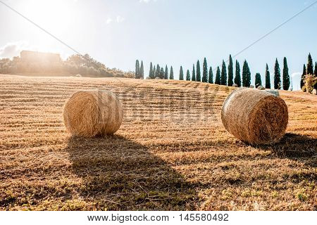 Hayfield with rolls at the farmland in Tuscany in Italy
