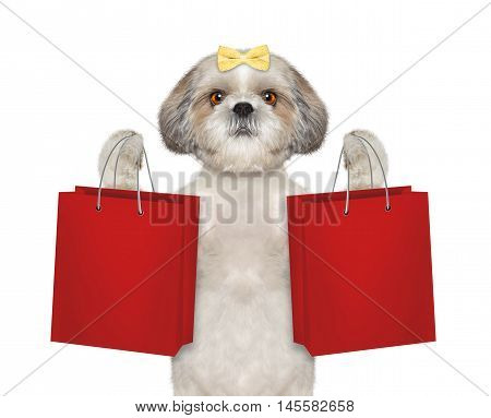 Dog goes shopping -- isolated on white