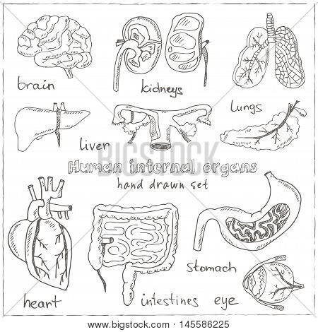Human internals doodle set. Vintage illustration for identity, design, decoration, packages product and interior decorating