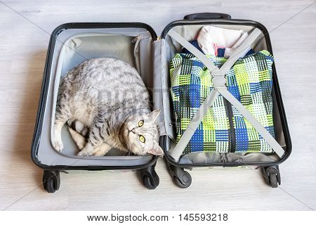Silver tabby cat lying in packed suitcase on floor