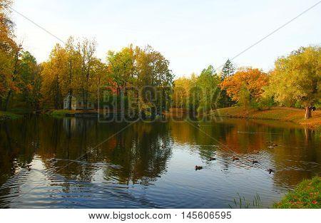 Autumn morning in the Alexander park in Tsarskoye Selo