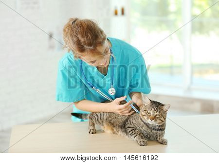 Veterinarian doctor vaccinating cat at a vet clinic