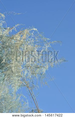 white background with  flowers against blue sky