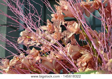 pink orchid flowers background, orchid bouquet outdoors