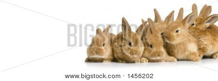 Scared group of bunnies in front of a white background poster