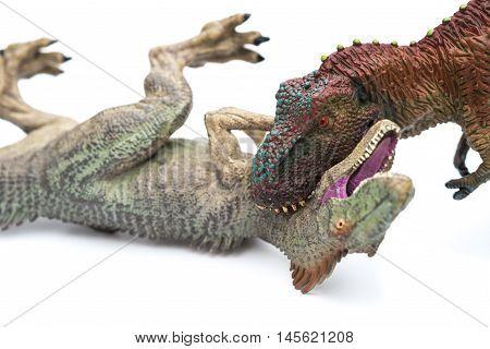 tyrannosaurus biting allosaurus on a white background