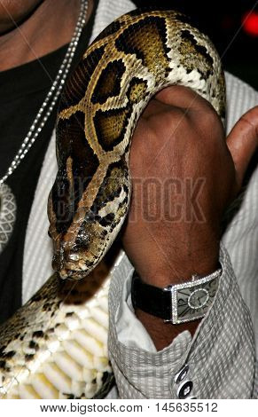 Snake at the Los Angeles premiere of 'Snakes on a Plane' held at the Grauman's Chinese Theatre in Hollywood, USA on August 17, 2006.