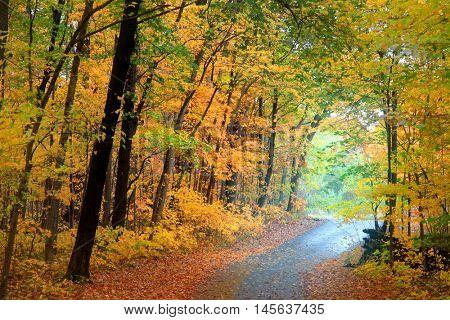 Biking trail through autumn trees