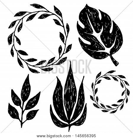 Set Of Hand Drawn Branches. Ink Illustration. Collection Of Plants.