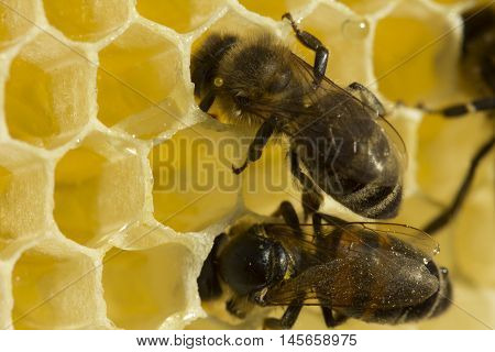 Implemented by the process of converting nectar to honey.