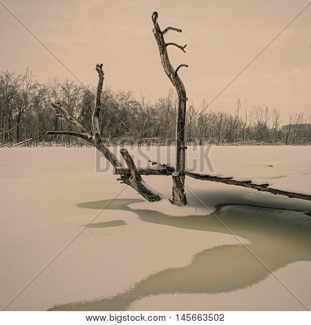 dry tree and a wooden bridge on the frozen river