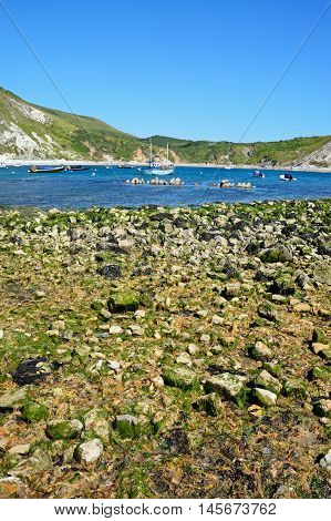 LULWORTH COVE, UNITED KINGDOM - JULY 19, 2016 - View of the cove with the rocky shoreline in the foreground Lulworth Cove Dorset England UK Western Europe, July 19, 201.
