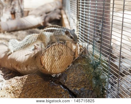 Striped Chipmunk Sitting On A Log