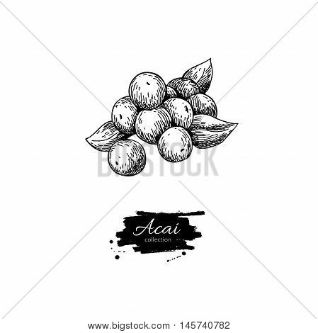 Acai berry vector superfood drawing. Isolated hand drawn illustration on white background. Organic healthy food. Great for banner poster label sign
