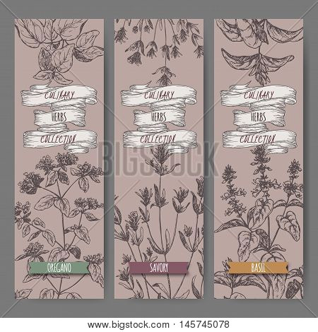 Set of three vector banners with oregano, savory, basil sketch. Culinary herbs collection. Great for cooking, medical, gardening design.