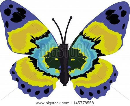 Sweet blue and yellow butterfly vector, illustration hand drawing