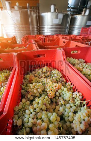 winemaking with grapes and Fermentation stainless steel tanks vessels