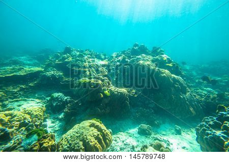 Typical seabed of Phuket, Racha Noi in Thailand. Landscape for background.
