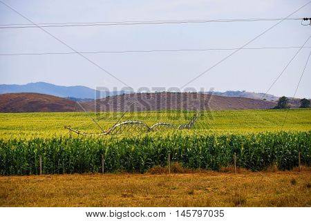 Corn planting the roadside with artificial irrigation