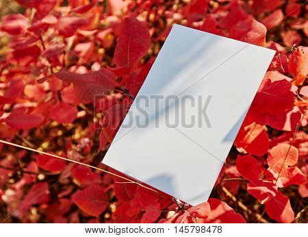 nature, season, white paper sheet on blur autumn park background